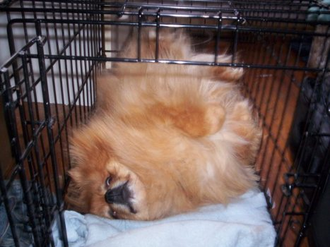Dead dog in Cage